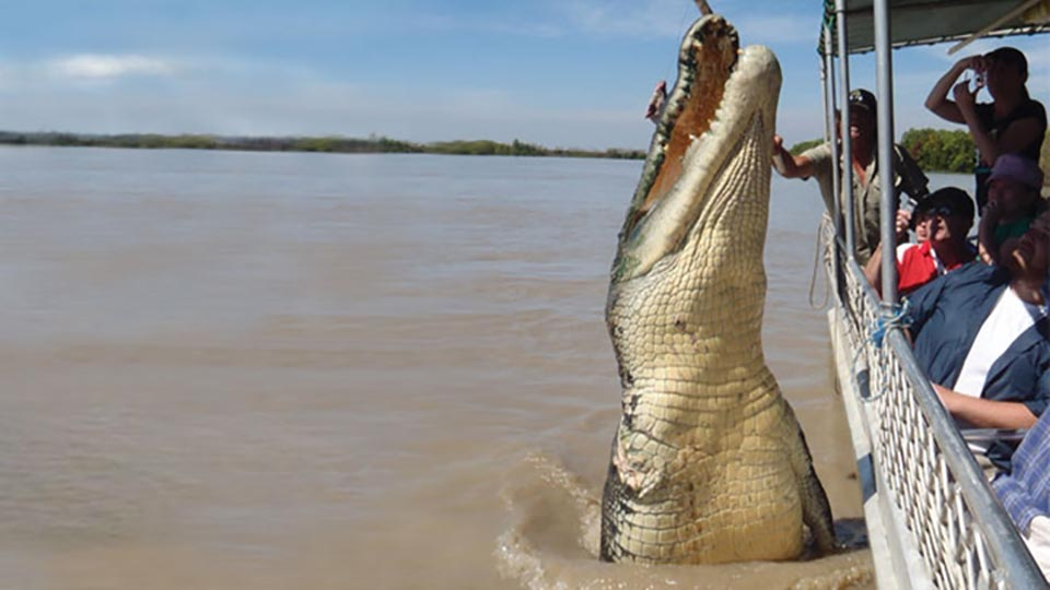 Largest Crocodile Ever Killed Brutus (crocodile)