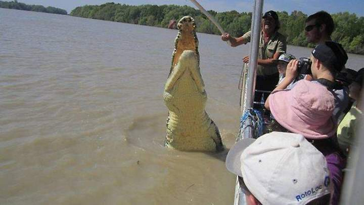 Largest crocodiles ever recorded No. 5 - Brutus