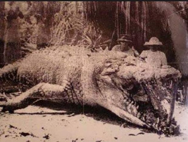 Largest Crocodiles Ever Recorded: Krys Crocodile