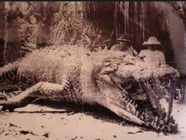 9281a27f5840f1 Top 10 Largest Crocodiles Ever Recorded - Our Planet