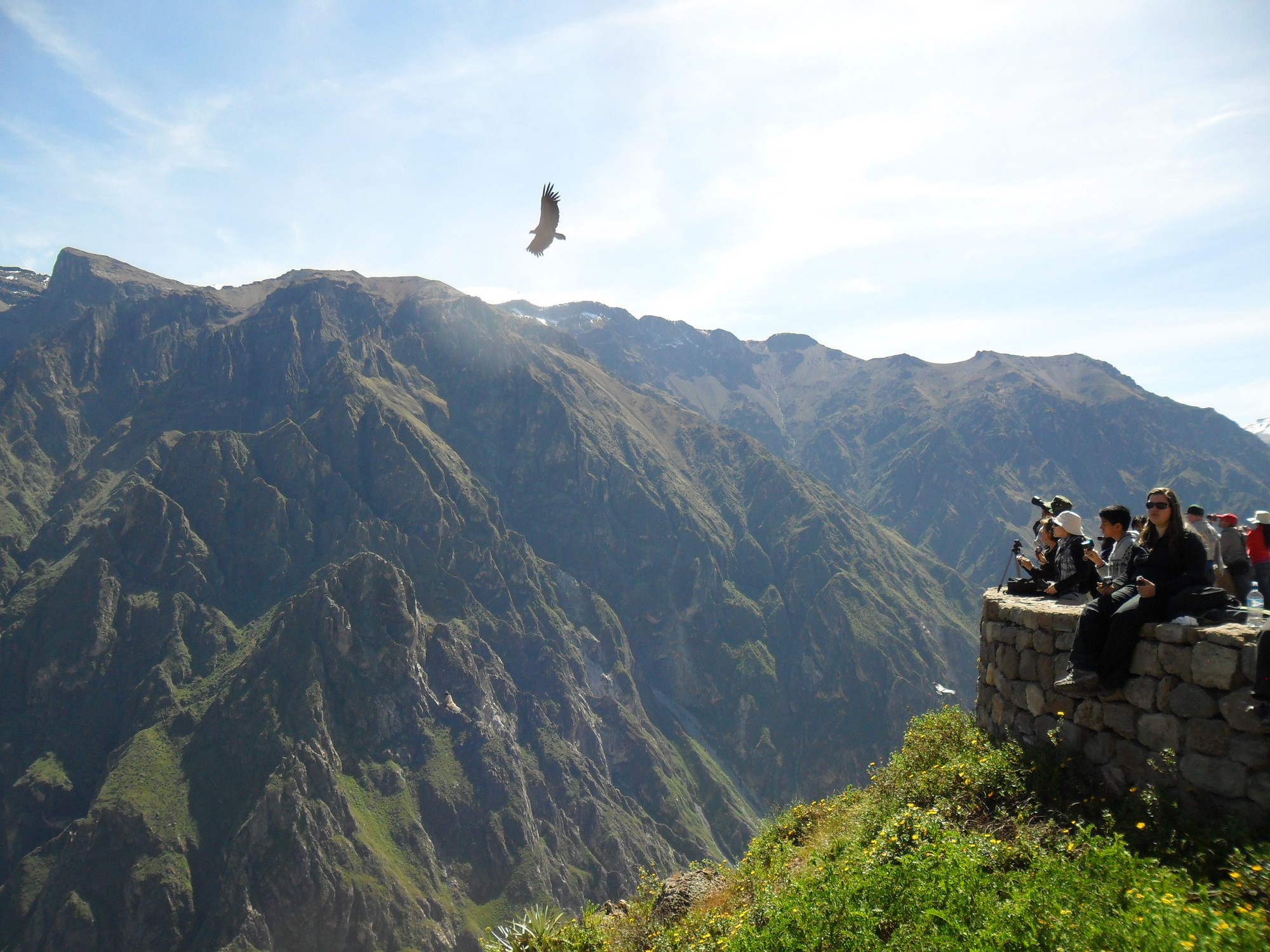 The Andean Condor, Colca Canyon