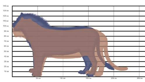 Lion&tiger size comparison