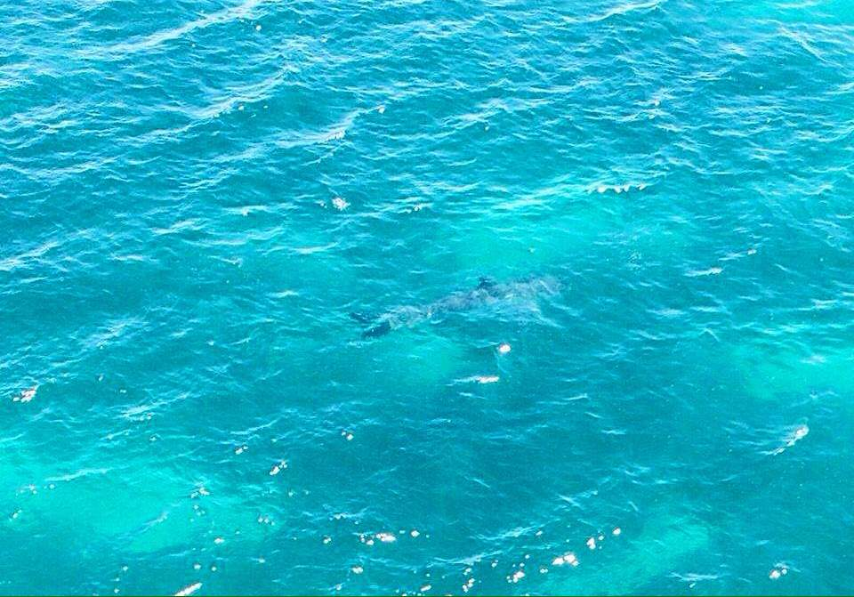 Largest great white sharks: 7 meter great white shark, Marino Bay, Australia
