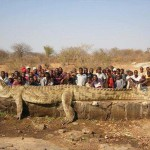 World 39 s top 5 largest crocodiles ever recorded our planet for World s longest video