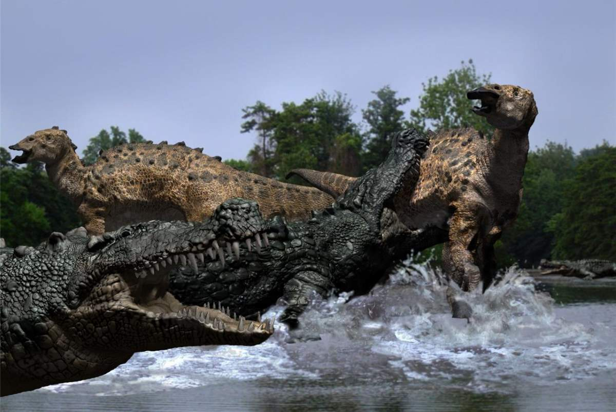 Largest prehistoric crocodiles: Deinosuchus attacks a dinosaur