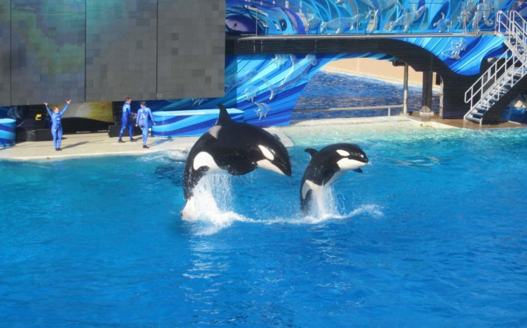 Kasatka and her daughter Kalia