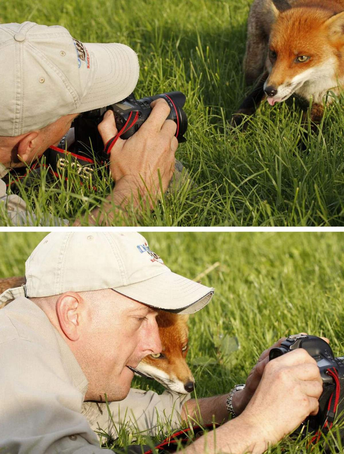 Photographers and Wild Animals: Photographers and Wild Animals: A fox and photographer