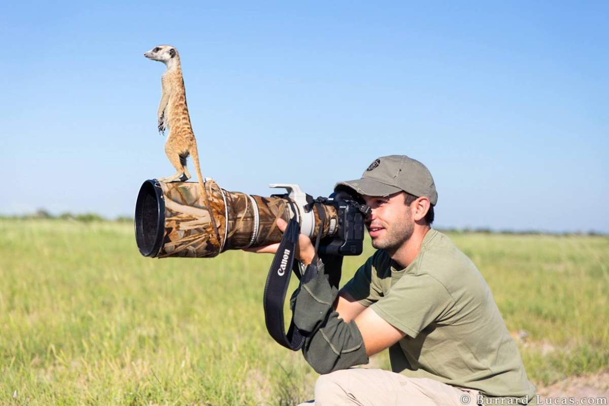 Photographers and Wild Animals: A meerkat and photographer