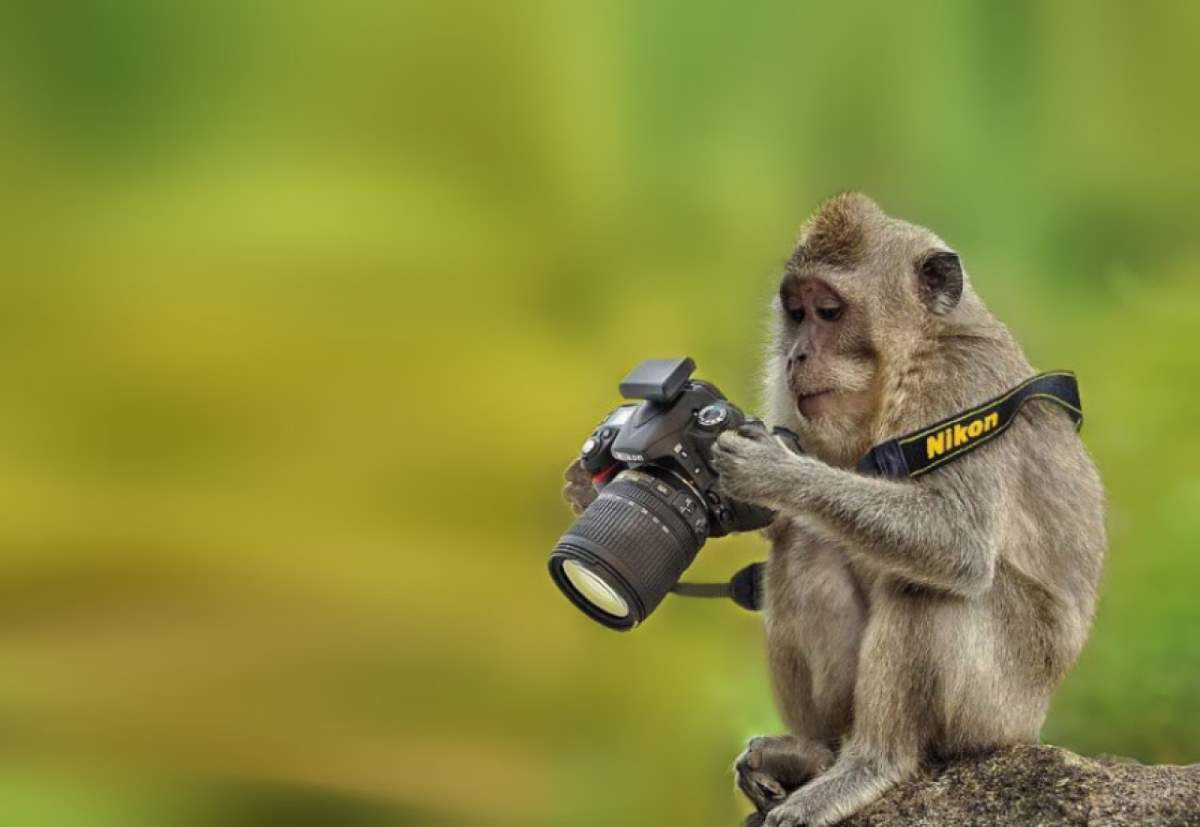 Photographers and Wild Animals: A monkey and a camera
