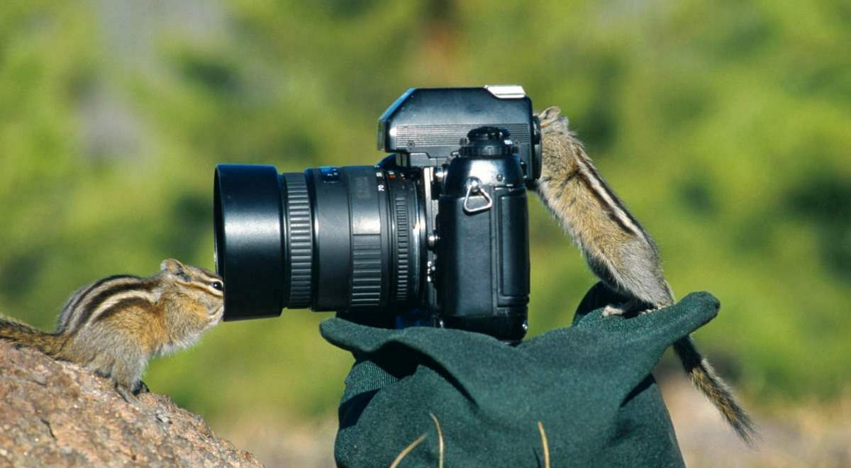 Photographers and Wild Animals: Two chipmunks and a camera