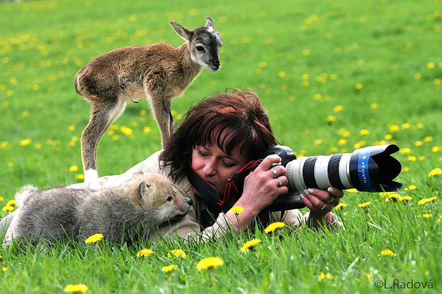 Photographers and Wild Animals: A fawn and a wolf puppy