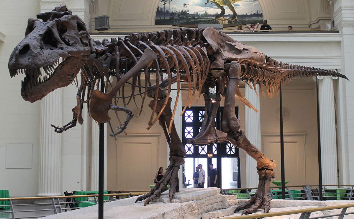 Largest dinosaurs ever lived: Sue the T-Rex