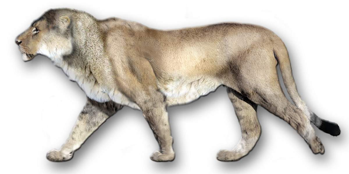 Largest prehistoric cats: American lion (Panthera leo atrox) reconstruction