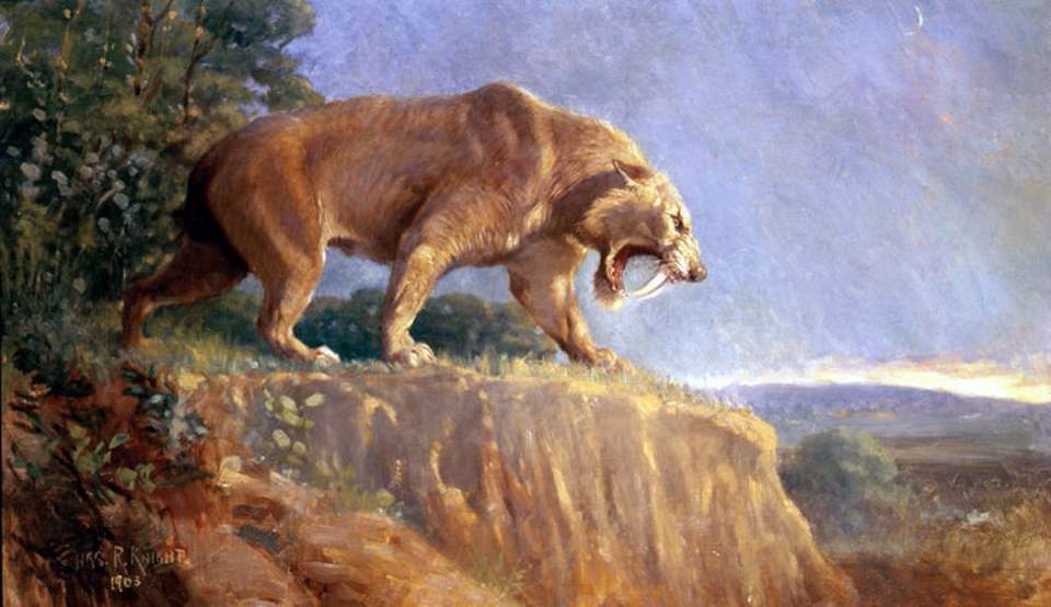 Largest prehistoric cat: Smilodon populator restoration