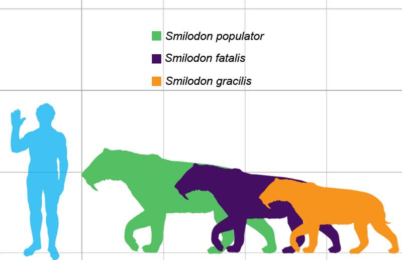 Largest prehistoric cats: Smilodon size comparison