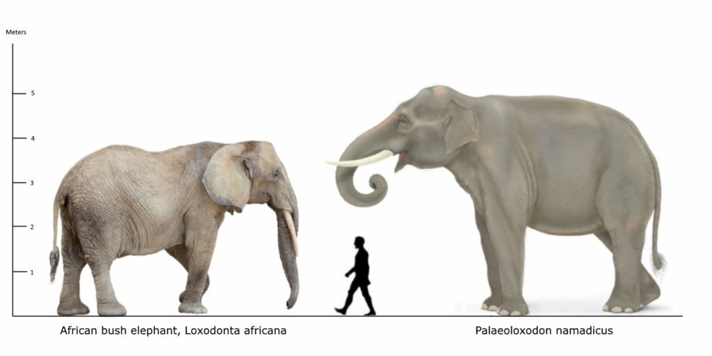 Largest prehistoric mammals - Our - 37.1KB