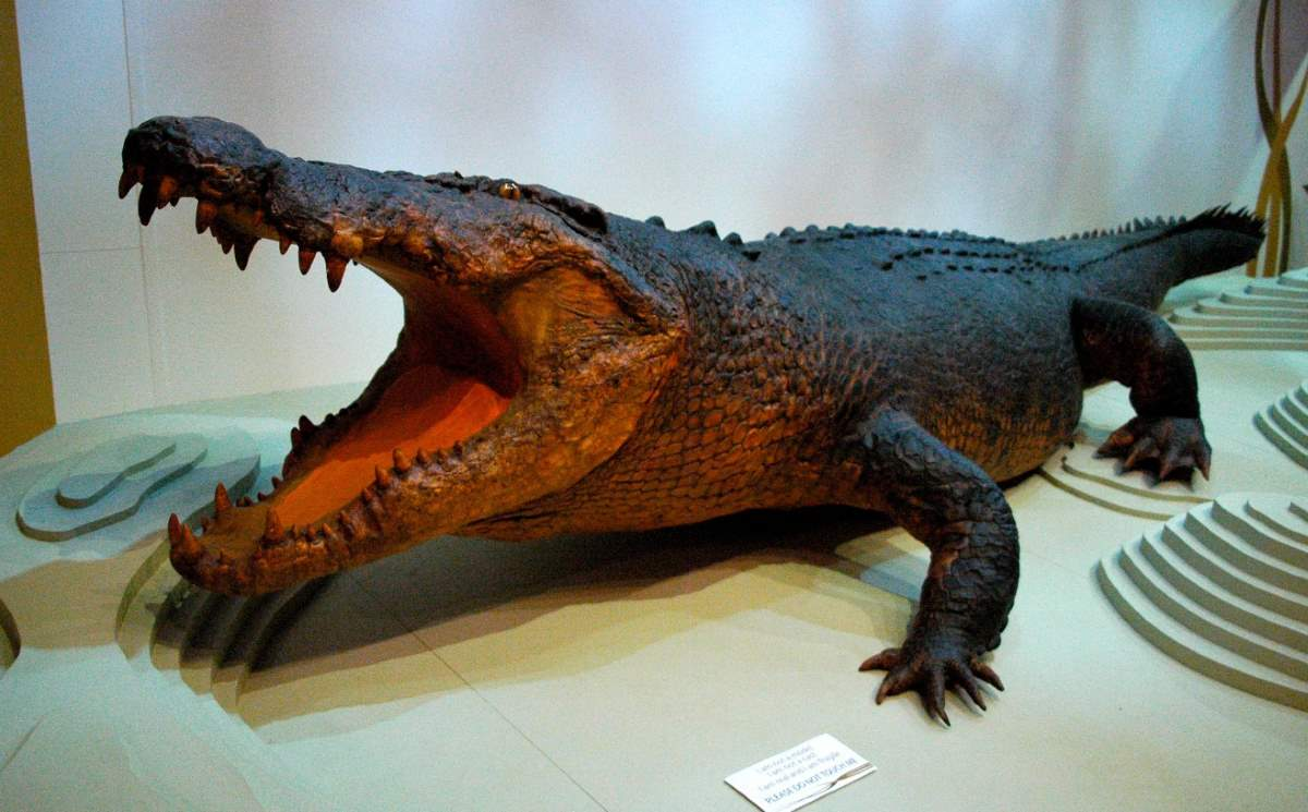e166d6a4c13d1a Largest Crocodiles Ever Recorded  Sweetheart (crocodile)