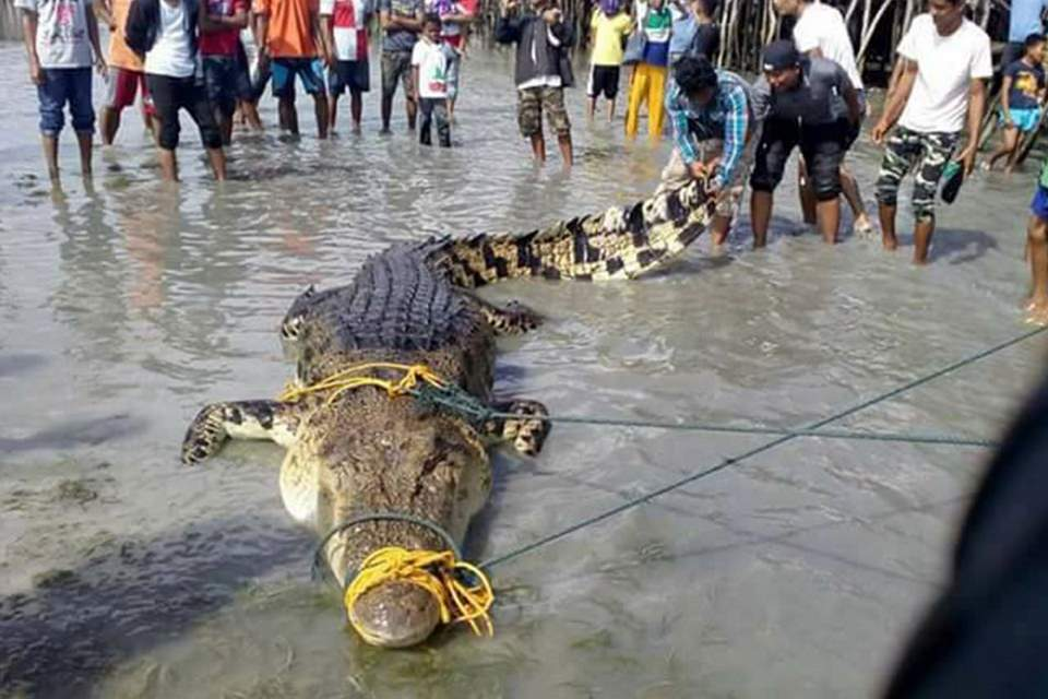 Largest Crocodiles Ever Recorded: Tawi-Tawi crocodile