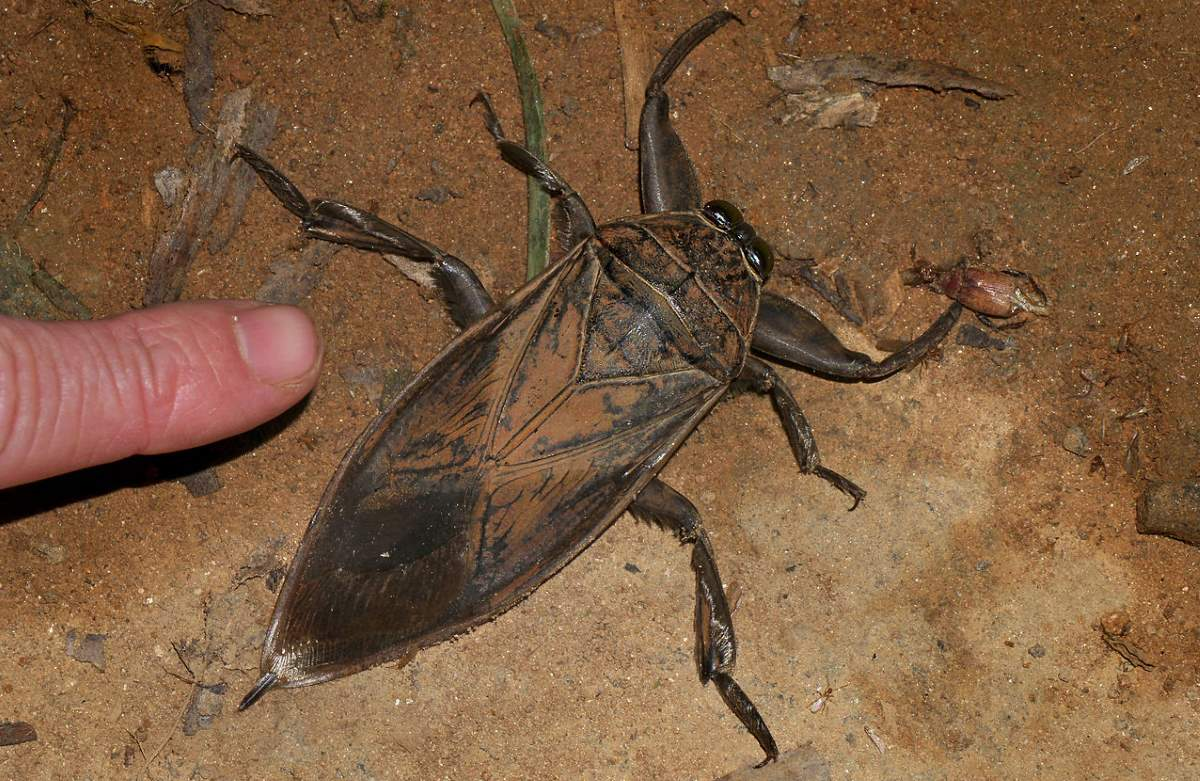 Big bugs and other giant insects