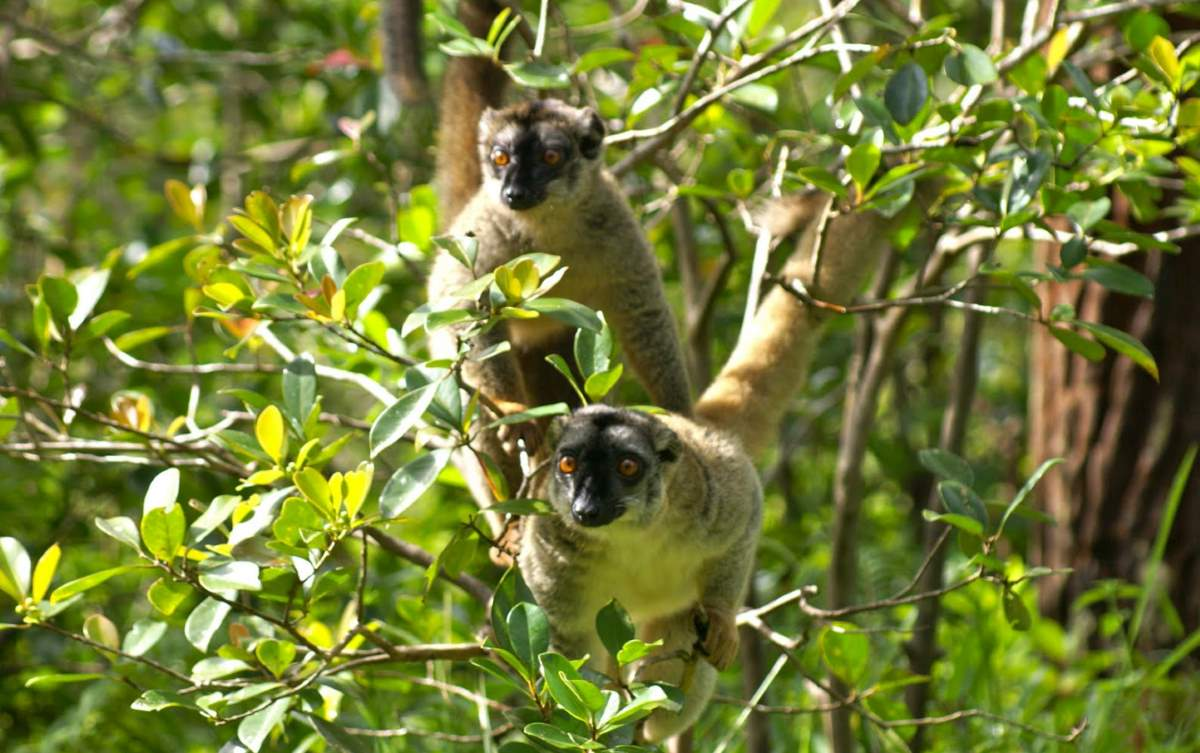 Places to See Before They Have Vanished: Lemurs