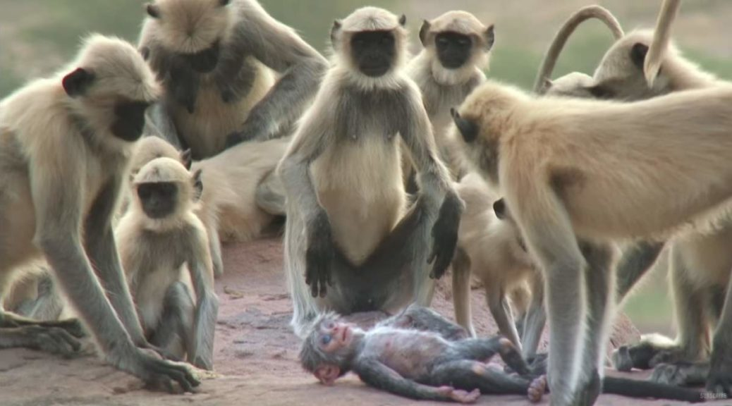 Monkeys accidentally kill a robot baby