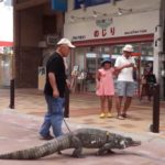 Japanese Man Lives With Pet Caiman