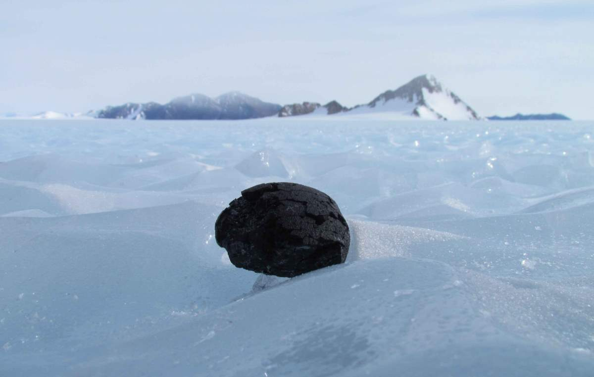Meteorite on- Antarctic ice