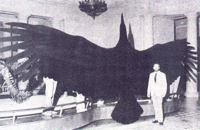 Largest prehistoric bird species: Argentavis magnificens: the heaviest flying bird ever lived