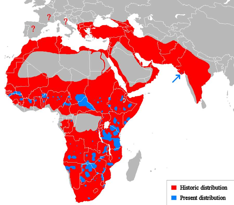 Lion facts: Lion distribution map (historic and current)
