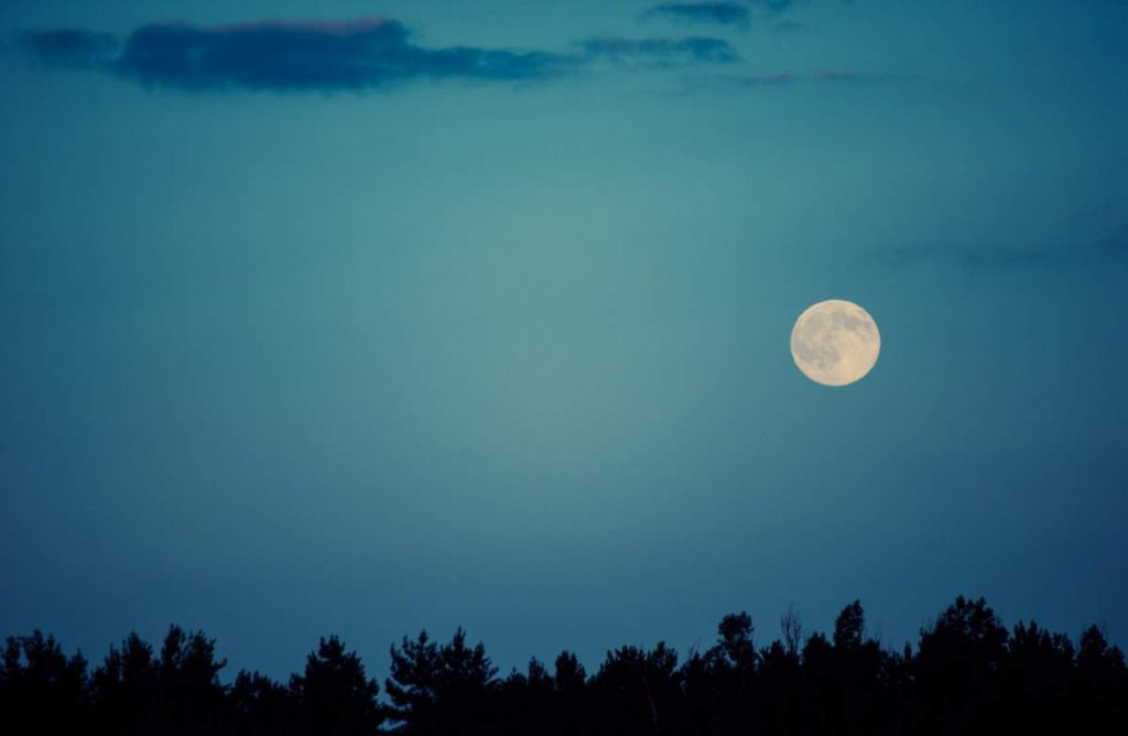 Moon facts - Moon over trees