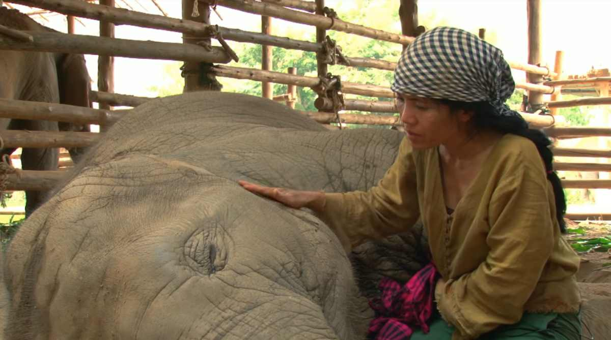 Faa Mai, the snoring elephant, and her caretaker Lek