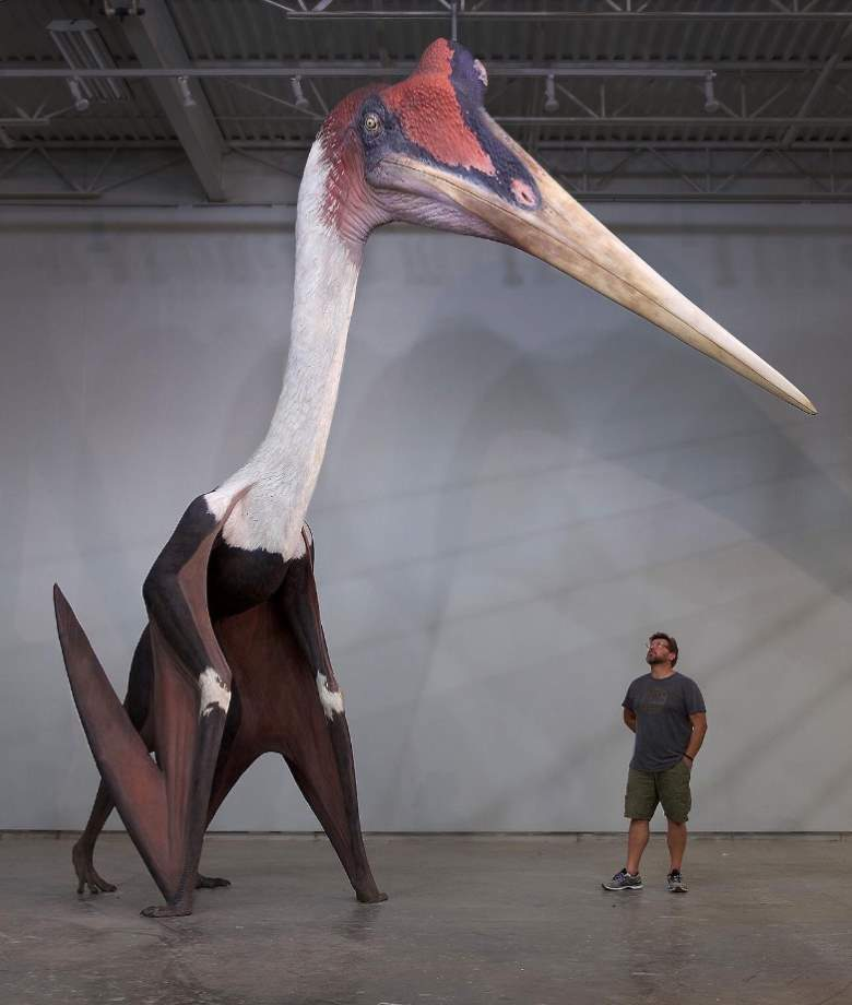 Quetzalcoatlus northropi - human size comparison. Quetzalcoatlus was the largest known flying animal to ever exist.