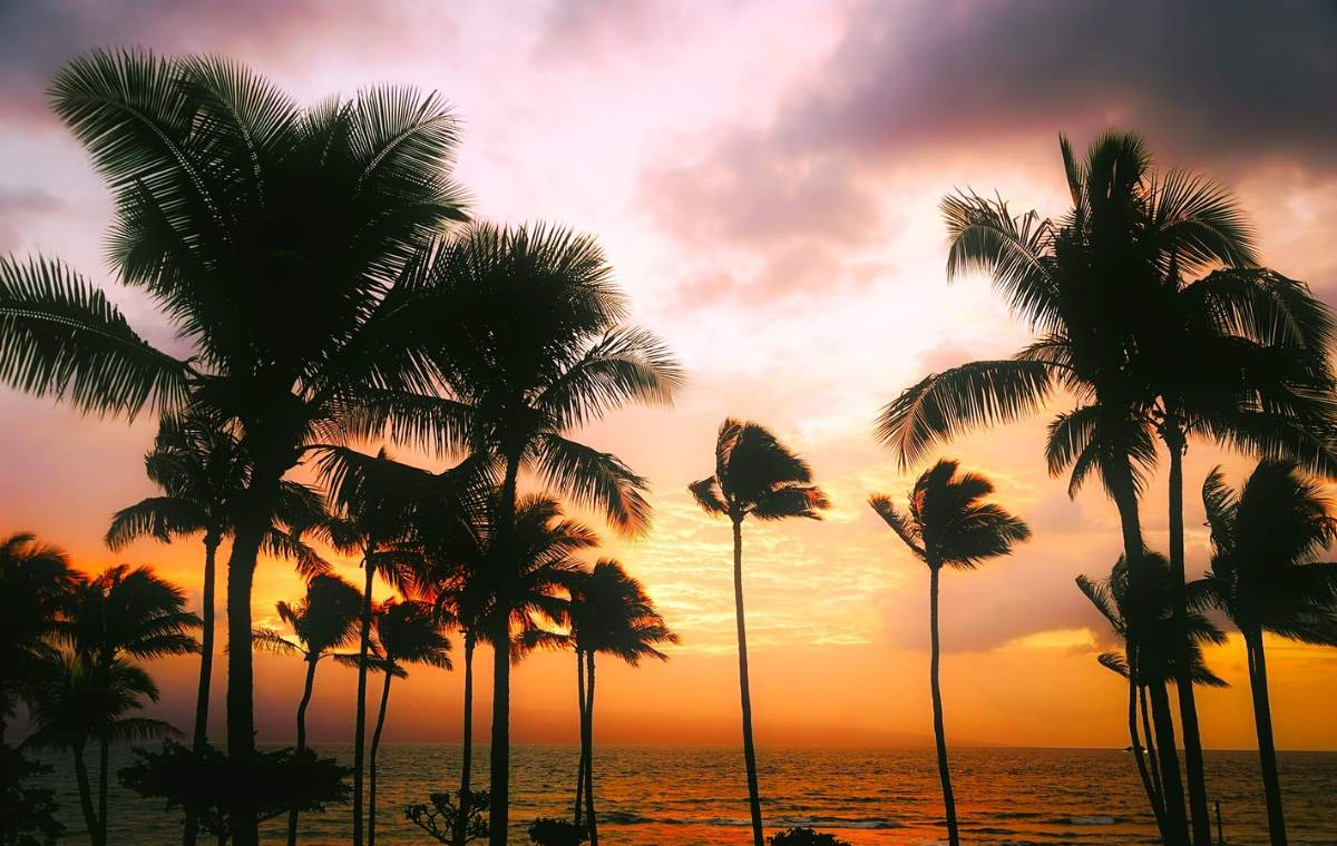 Palm trees during the sunset