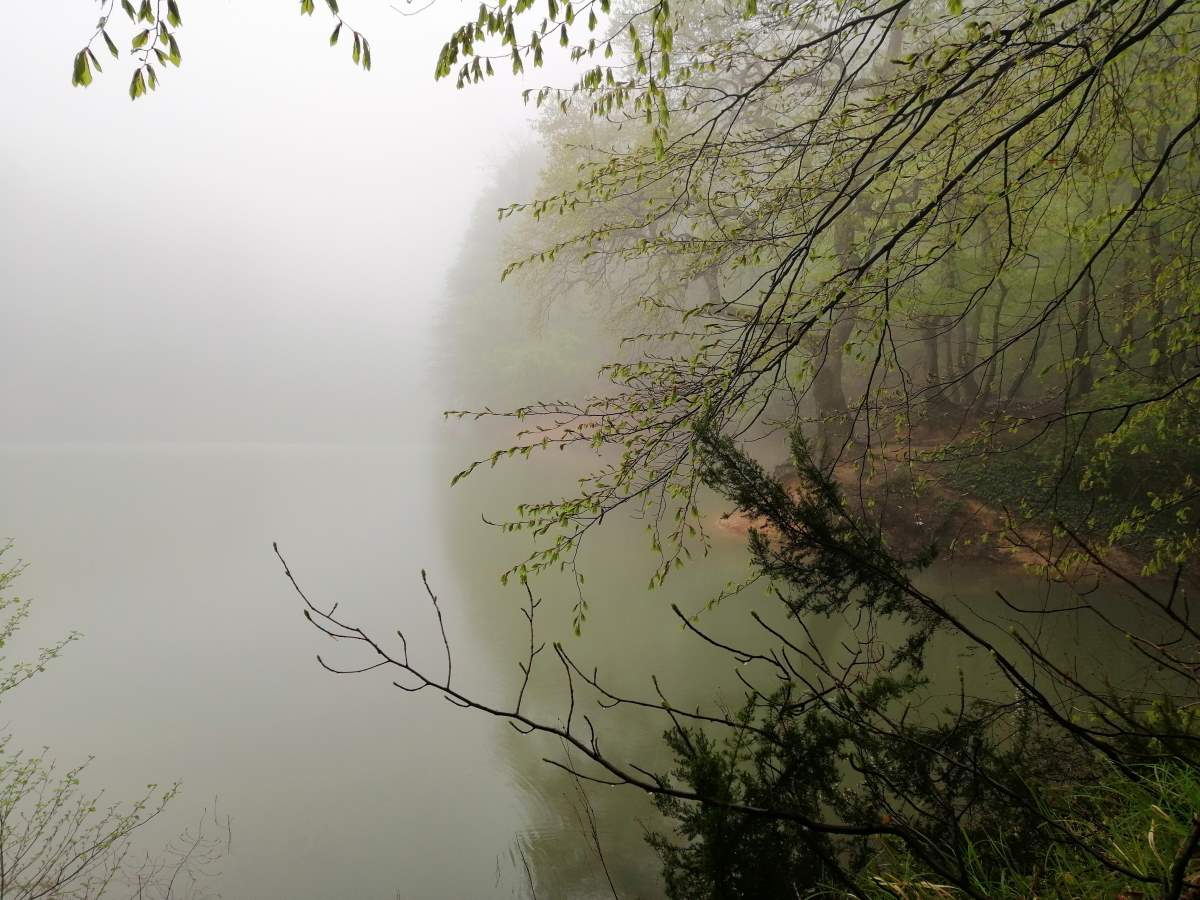 A misty lake in the Belgrade Forest, İstanbul, Turkey
