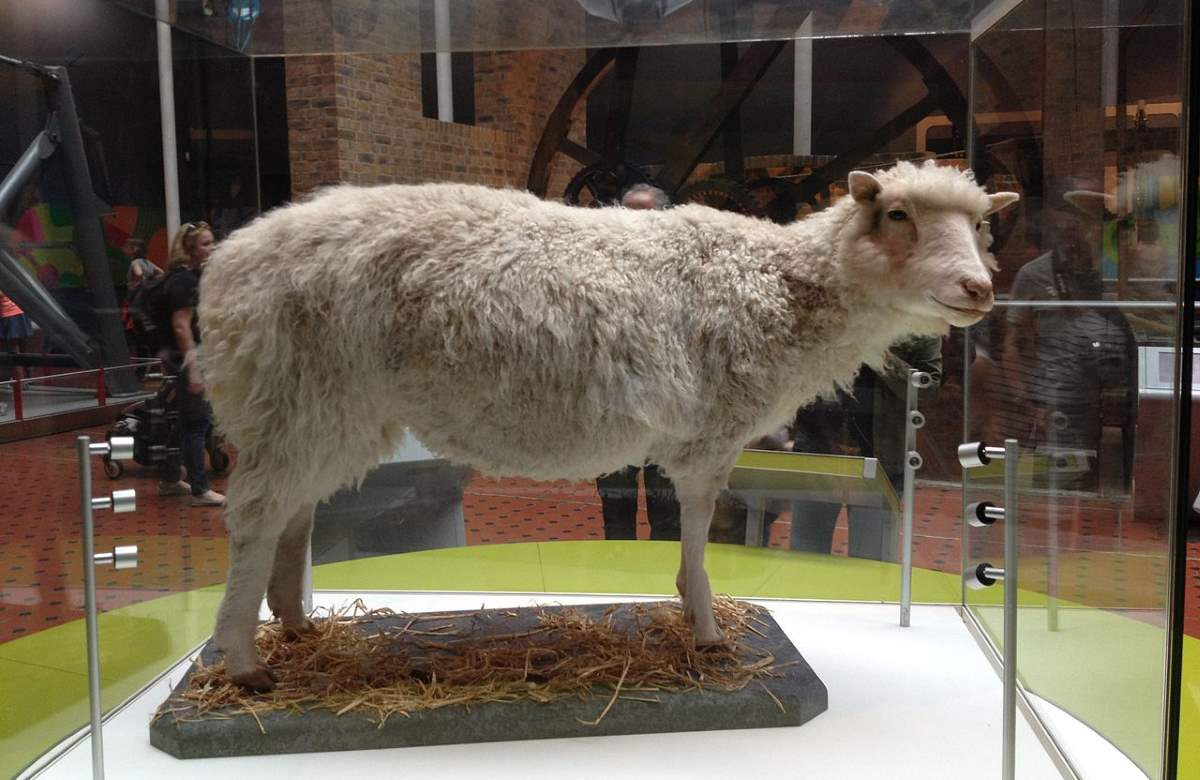 Cloning: The taxidermied body of Dolly the sheep