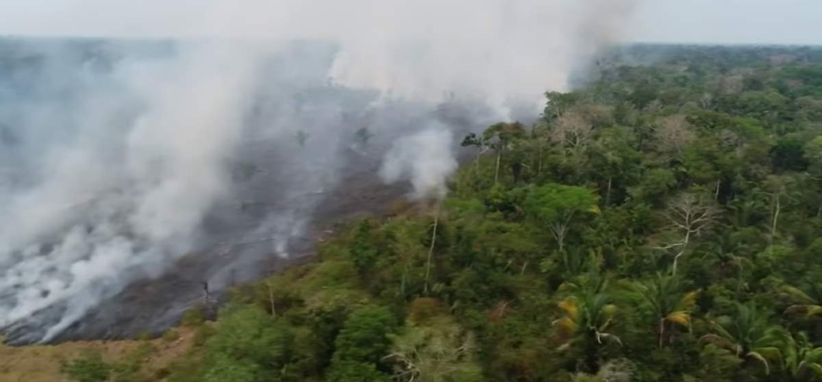 Amazon rainforest fire - drone footage