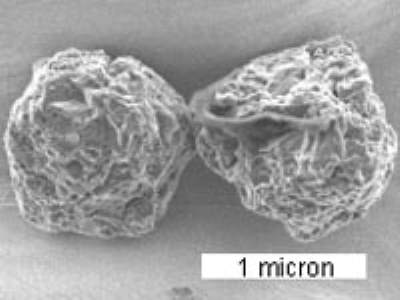 Murchison meteorite stardust contains the oldest material on Earth
