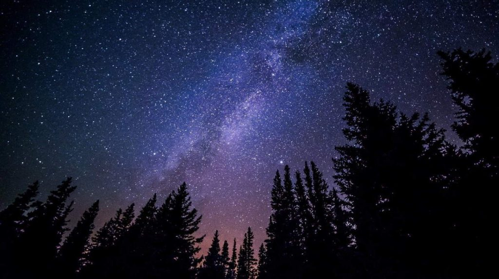 Galactic archaeology - Milky Way and trees at night