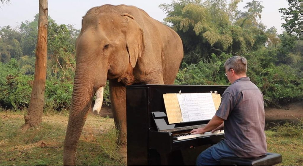 Paul Barton: the man who plays classical music on piano for elderly/disabled elephants