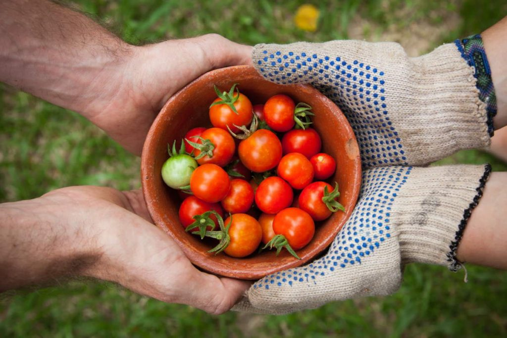 Buying local food is not always better for the environment
