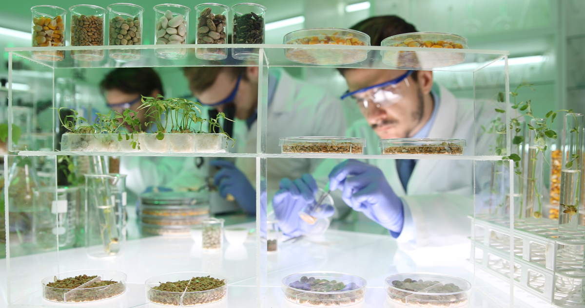 Scientists working on plant-based food